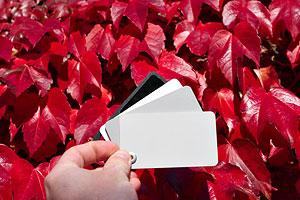 wb_graycard.jpg