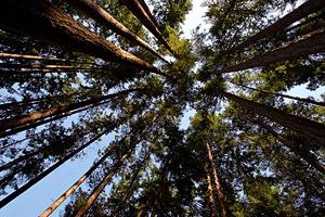 wa_forest-trees.jpg