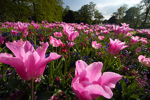 wa_flowers.jpg